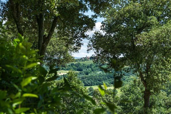 boschi di querce a La Fagianaia a Peccioli a Pisa